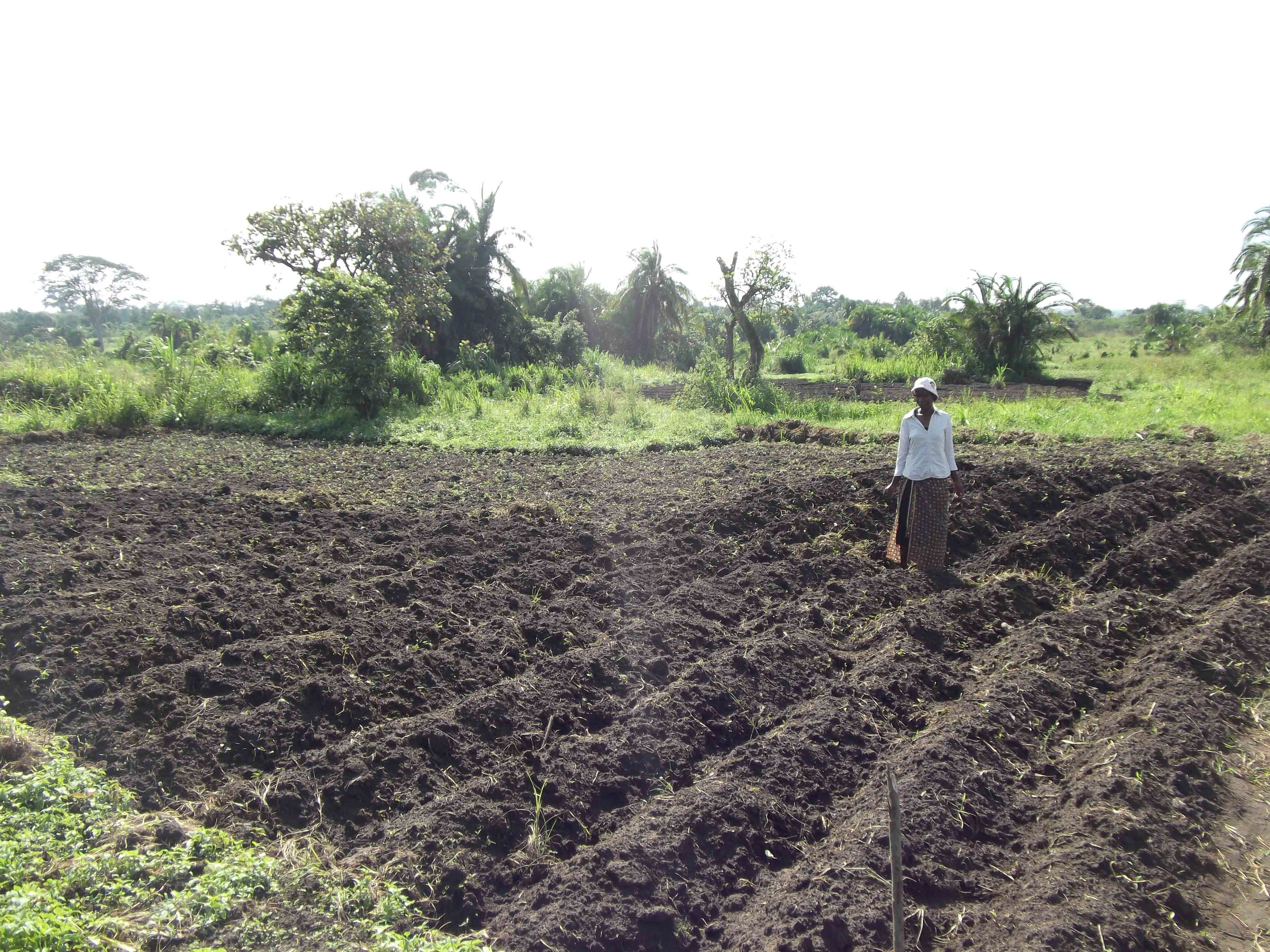 W-Planting-Sweet-Potatoes-at-Revival-Farm-2011
