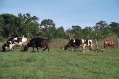 W-Revival-Farm-Cows-Produce-Milk-2011